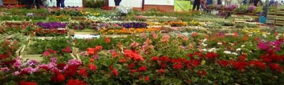 Festival cveća u Vukovaru otvoren do nedelje