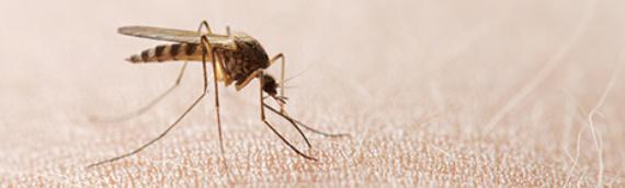 Prvi slučaj zaraze virusom Zapadnog Nila u Vukovaru