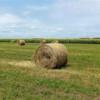 Borovo: Opštinski Program raspolaganja državnim poljoprivrednim zemljištem dobio saglasnost