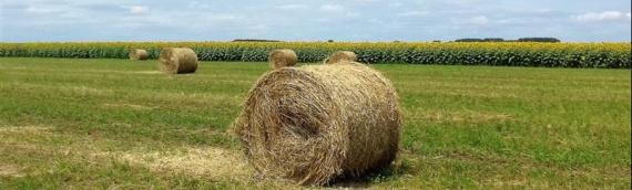 Borovo: Javni uvid u Nacrt izmena i dopuna Programa raspolaganja poljoprivrednim zemljištem