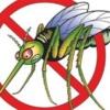 U četvrtak tretiranje komaraca u Borovu
