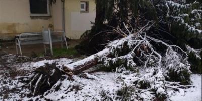 U Borovu vetar isčupao bor iz korena