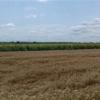 Borovo: Ministarstvo poljoprivrede dalo saglasnost za raspodelu poljoprivrednog zemljišta