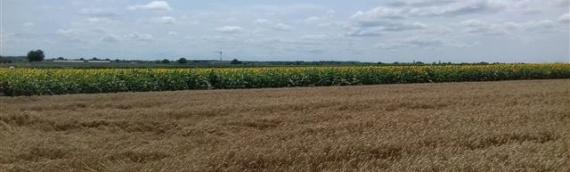Opština Borovo objavila konkurs za zakup poljoprivrednog zemljišta u vlasništvu RH