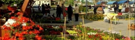 Poziv za učešće na Festivalu cveća u Vukovaru