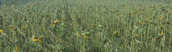 Prema prvim procenama šteta od tuče u Borovu 2,7 miliona kuna