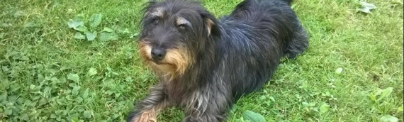 Besplatno čipovanje pasa u Borovu