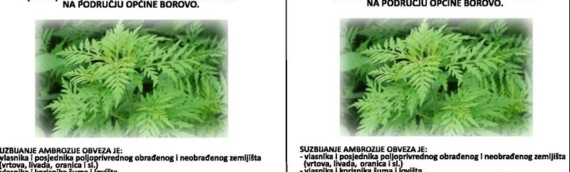 Borovo: Suzbijanje ambrozije nije samo potreba nego i obaveza
