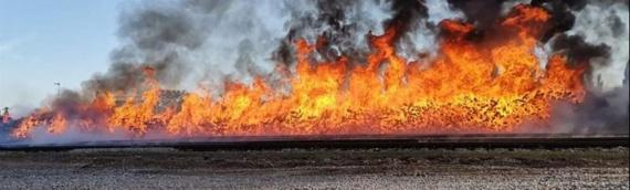 U gašenju požara u Borovu naselju učestvovali i vatrogasci iz Borova