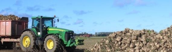 U e-savetovanju Program potpore proizvođačima šećerne repe vredan 30 miliona kuna